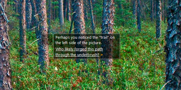 "Perhaps you noticed the ""trail"" on the left side of the picture. Who likely forged this path through the underbrush? »"