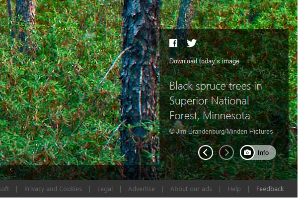 Black Spruce Trees in Superior National Forest, Minnesota (© Jim Brandenburg/Minden Pictures)